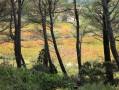 Massif de la Clape : plateau et grottes de Figuières