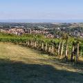 Vignoble de Wissembourg