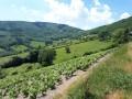 Une boucle de Quincié-en-Beaujolais à Lamure-sur-Azergues