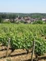 Vignoble reuillois