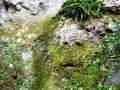 Les Gorges du Régalon