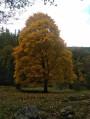 Voici les couleurs de l'automne