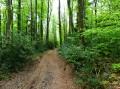 Voie forestière