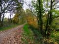 Par la Chapelle Sainte-Brigitte et le Bois de Névet
