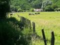Promenade en forêt sur les hauteurs de Neuville