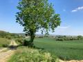 Bois des Bruyères (Angres) depuis le collège Jean Vilar
