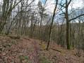 Vue dans les bois de feuillus