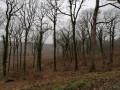 Vue de la forêt depuis la Route Forestière des Gelinottes