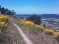 Vue de la Vaunage et du Pic St Loup