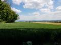 Du Haut-Rebberg au Tannenwald au départ du Belvédère de Mulhouse