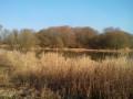 Vue sur l'étang en zone marécageuse