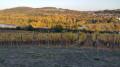 Harmanfontaine : entre Dornot et Novéant
