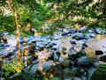 Vue sur la rivière