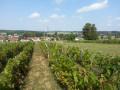 Vue sur le village depuis les vignes