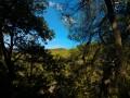 Promenade en forêt autour du Petit Ubac