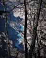 Vue sur les Gorges du Verdon au travers des arbres